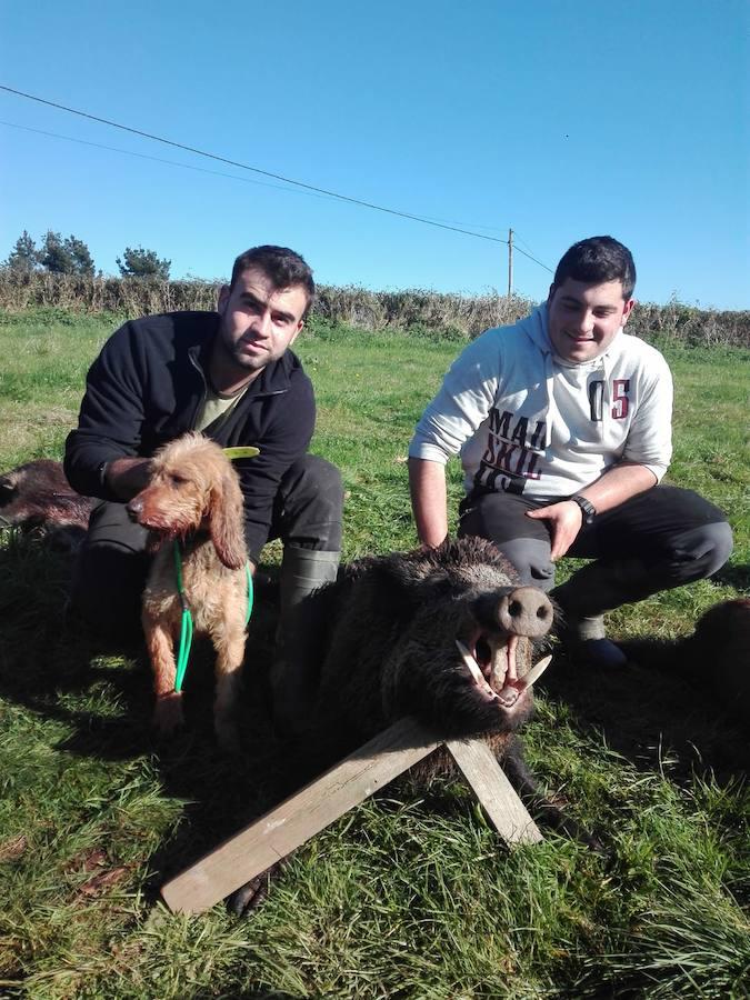 Mario Galindo y 'Keila' lo levantaron y Pablo Zapatero echó a tierra este jabalí. :: Miguel Toyos