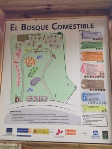 22-zambrano-parque-el-bosque-maria-zambrano-img_8523