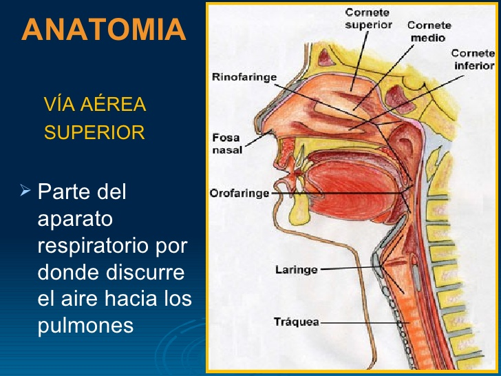 Apnea obstructiva del sueño | El Fonendoscopio - Blogs elcomercio.es